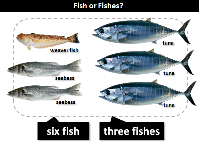 Fish Or Fishes