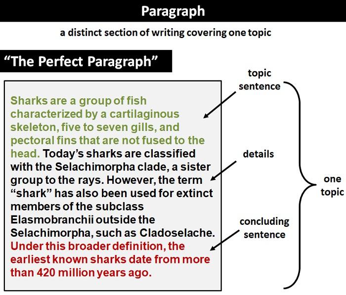 Paragraph Definition