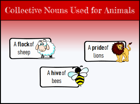 Collective Nouns | What are Collective Nouns?